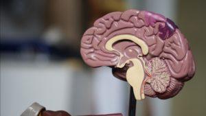 神经推销研究