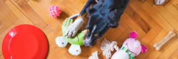 Caso de éxito Pets at Home