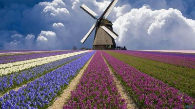 Windmill-and-Flower-Field (1) (1) (1)