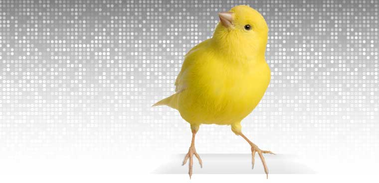 Canary bird on digital background