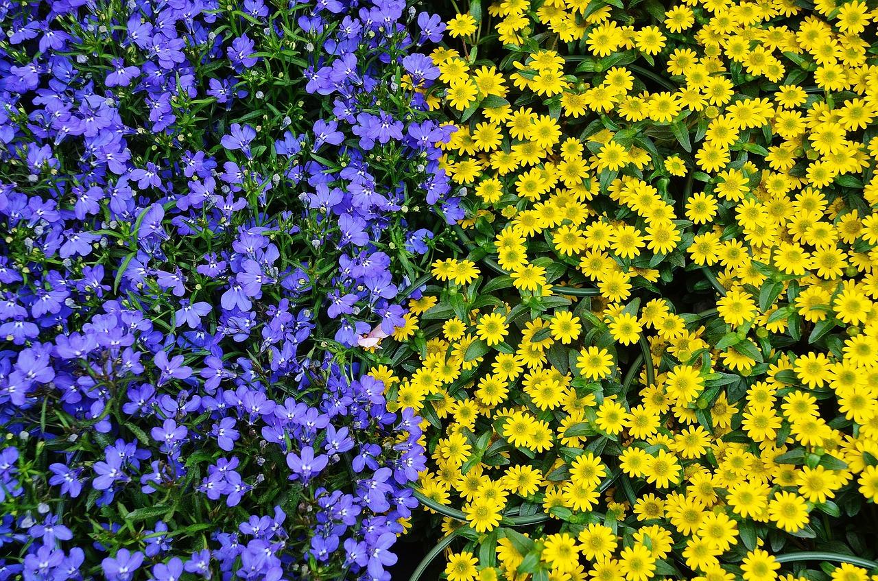 flowers-366155_1280